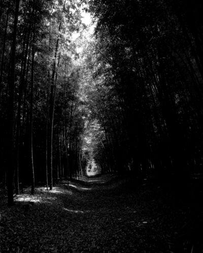 CHOI Soowhan, 'Emptiness - Bamboo Grove', 2019