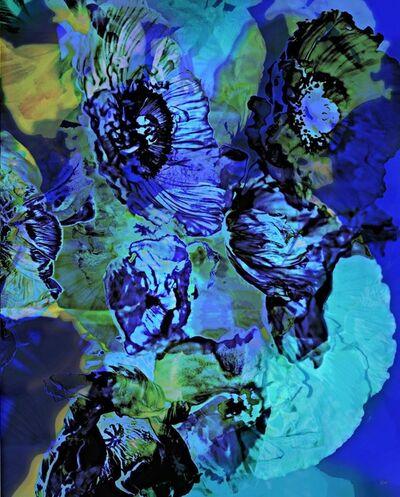 Sabine Wiedenhofer, 'deep blue poppies', 2018
