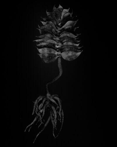 Miljohn Ruperto & Ulrik Heltoft, 'Voynich Botanical Studies, Specimen 03r Leto', 2017