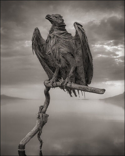 Nick Brandt, 'Petrified Fish Eagle, Lake Natron', 2012