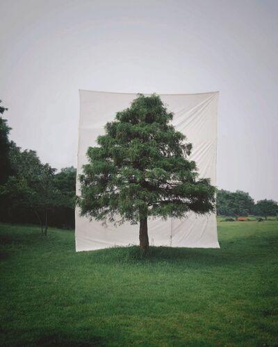 Lee Myoung Ho, 'Tree #10', 2006