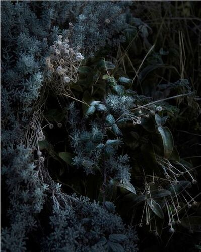 Nicolas Dhervillers, 'Still Life (Flora)', 2013-2015