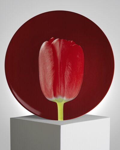 Robert Mapplethorpe, 'Tulip', ca. 2019