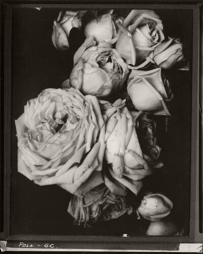 Edward Steichen, 'Heavy Roses, France', 1914