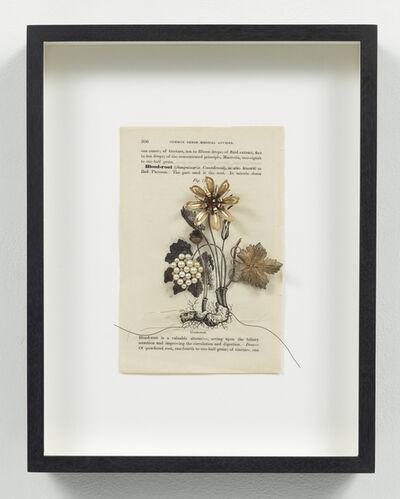 Eric Rhein, 'Medicinal Garden Series: Blood Root', 2005