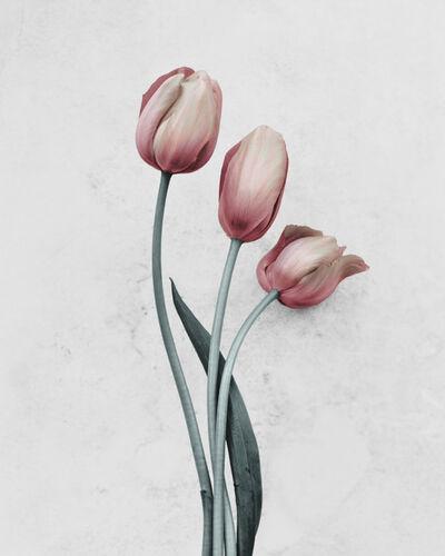 Vee Speers, 'Fleur ', 2016