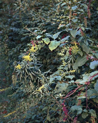 Janelle Lynch, 'Summer Wreath', 2016