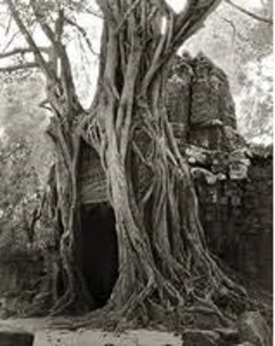 Beth Moon, 'Rooted Passage', 2007
