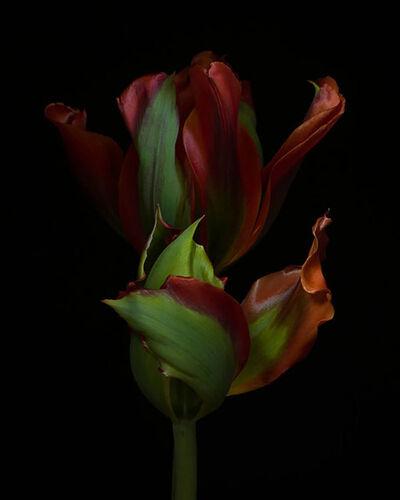 Ron van Dongen, 'Rembrandt Still Lifes', 2013