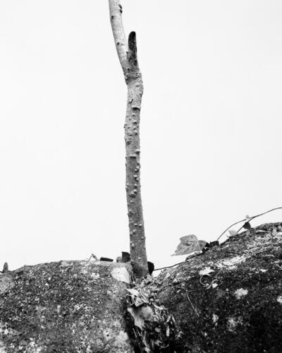 Daichi Koda, '(back)ground 13', 2019