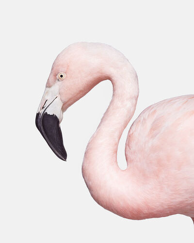 Randal Ford, 'Flamingo No. 3', 2018