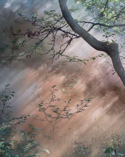 Sandra Kantanen, 'Forest 11 ', 2018