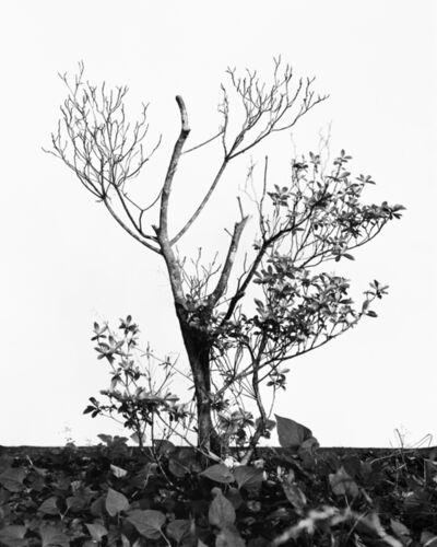 Daichi Koda, '(back)ground 15', 2019