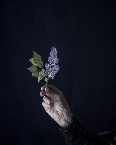 Cig Harvey, 'Mum Holding Pressed Lilacs, Rockport, Maine', 2018