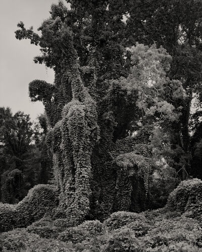 Helene Schmitz, 'The Gothic Tree', 2012