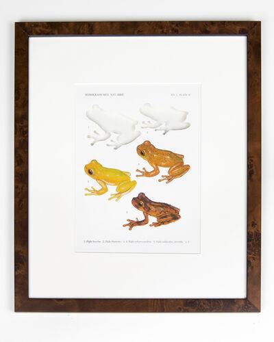 Brandon Ballengée, 'RIP Hazel's Treefrog and Adler's Mottled Treefrog: After David M. Dennis', 2015