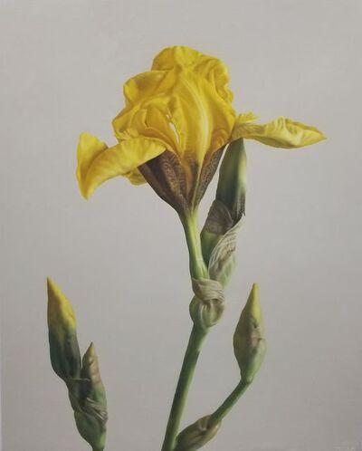 Adriana Molea, 'Yellow Iris', 2019