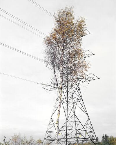 Robin Friend, 'Birch & Steel, Brokenhurst', 2008