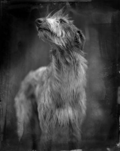 Keith Carter, 'Bog Dog', 2014