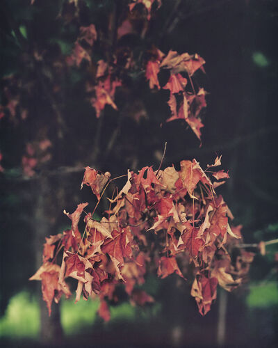 Janelle Lynch, 'Red Leaves After Rain', 2015