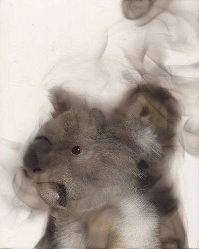 Steven Spazuk, 'Koala', 2020