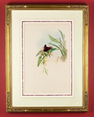 Brandon Ballengée, 'RIP Coppery Thorntail Hummingbird: After John Gould, 1861/2015', 2015