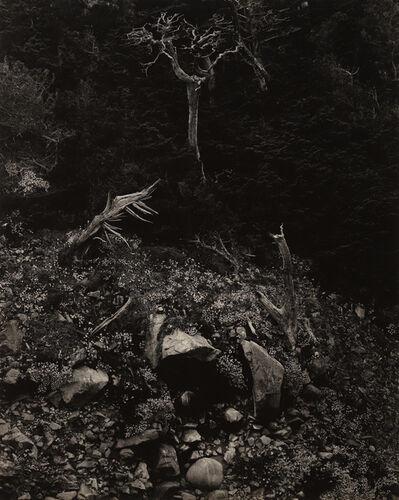 Edward Weston, 'North Dome, Point Lobos', 1946