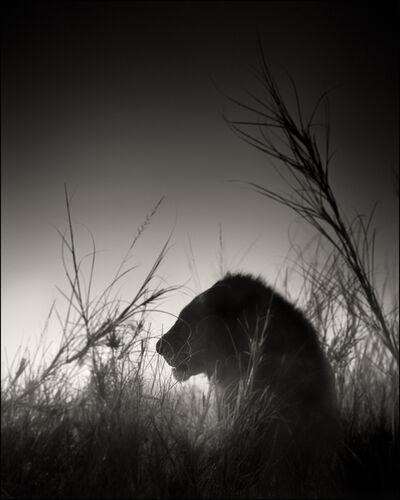 Joachim Schmeisser, 'Lion King', 2017