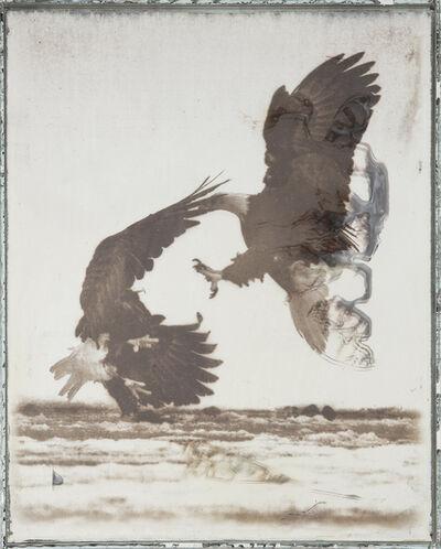 Matthew Brandt, 'Eagles 62C', 2017-2019