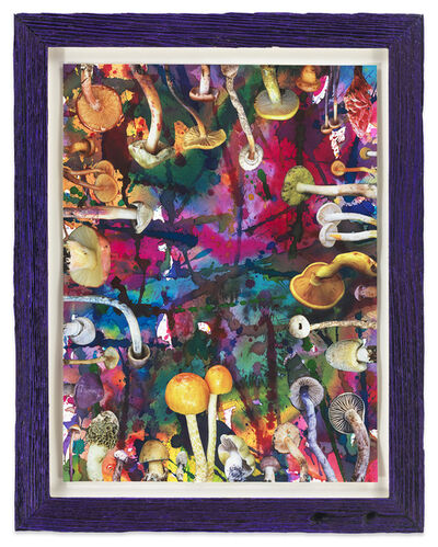 Douglas Melini, 'Untitled (SHRooMS purple frame)', 2020
