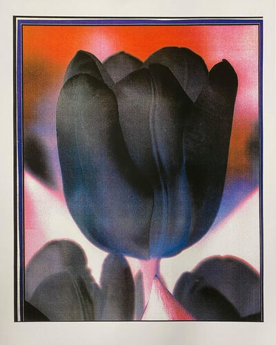 Peter Dayton, 'Dark Tulip', 2019