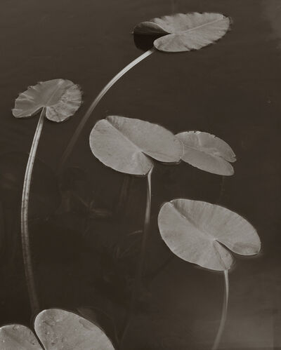 Koichiro Kurita, 'Floating Leaves, Boundary Water, MN', 1998