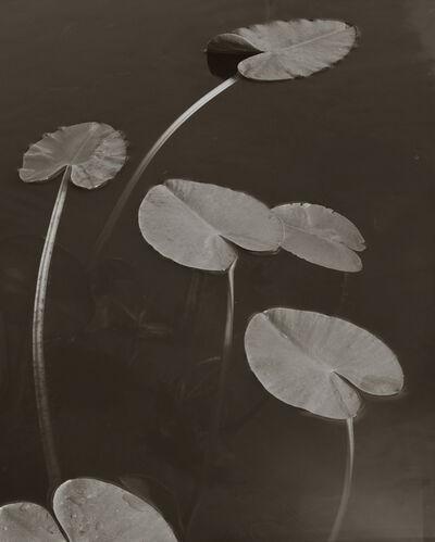 Koichiro Kurita, 'Floating Leaves, Boundary Water, MN', 1998