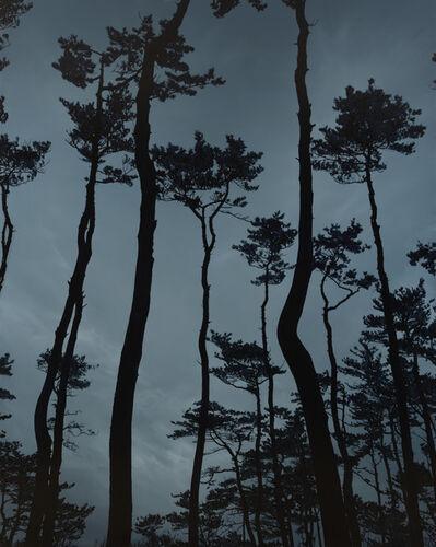 Kong Sung-Hun, 'A Pine Grove', 2013