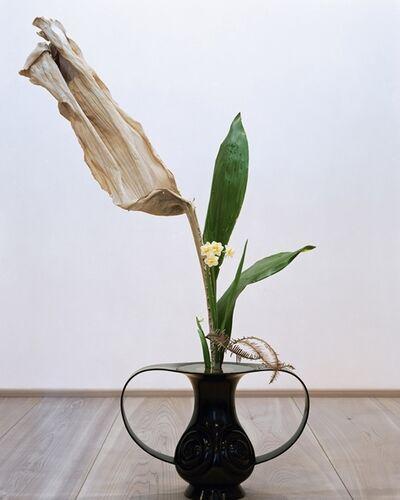 anothermountainman (Stanley Wong), 'anothermountainman x Shuho - reborn ikebana - 03A', 2011