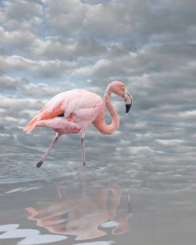 Cheryl Medow, 'Greater Flamingo', 2014