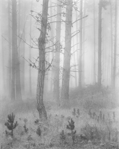 Wynn Bullock, 'Del Monte Forest; originally titled Pines In Fog', 1951