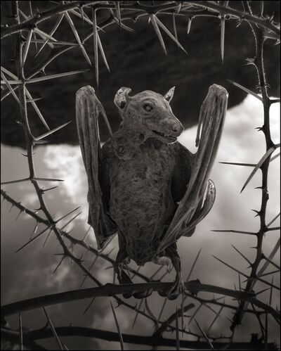 Nick Brandt, 'Calcified Bat II, Lake Natron, 2012', 2012