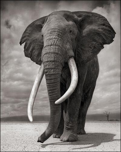 Nick Brandt, 'Elephant on Bare Earth, Amboseli', 2011