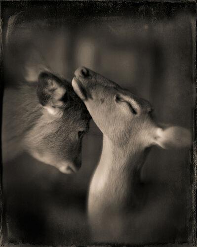 Keith Carter, 'Two Deer', 2012