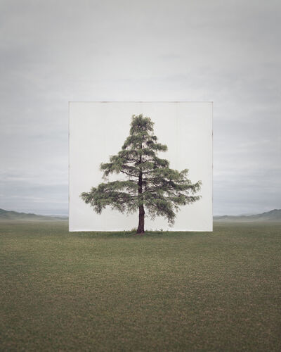 Myoung Ho Lee, 'Tree... #6', 2014