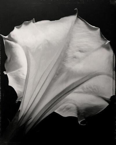 Tom Baril, 'Datura', 1997