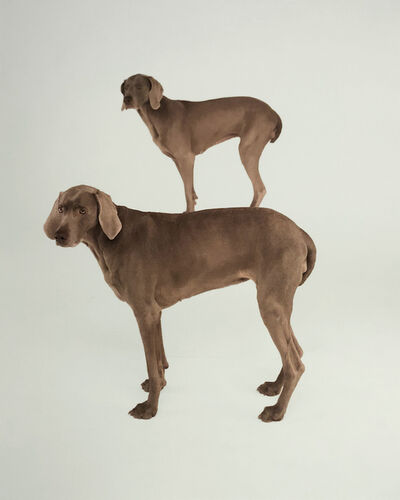William Wegman, 'Dog and Pony', 1997