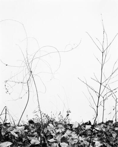 Daichi Koda, '(back)ground 02 ', 2019