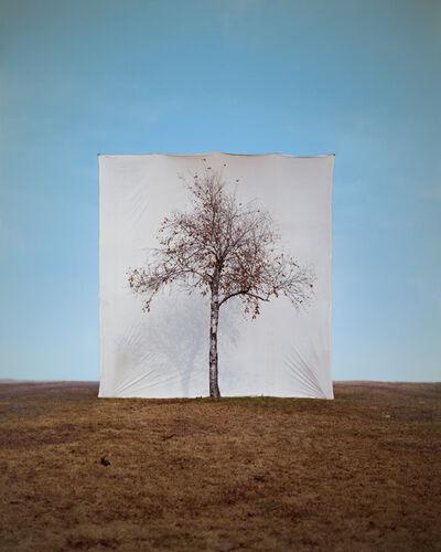 Myoung Ho Lee, 'Tree #1', 2006
