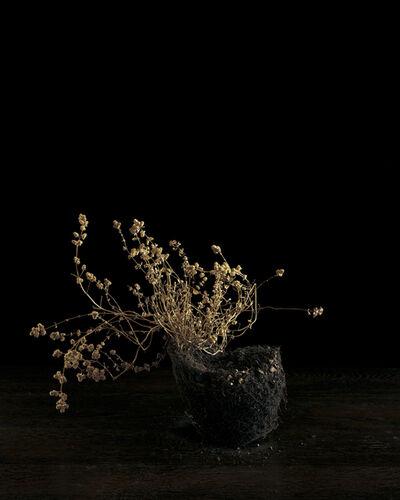 Brigitte Lustenberger, 'Flowers VII', 2010