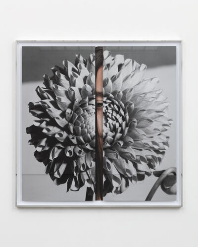 Kathryn Andrews, 'Hollywood Dahlia', 2019