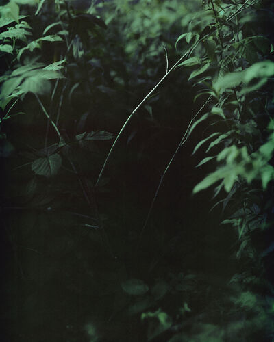 Janelle Lynch, 'Night', 2015