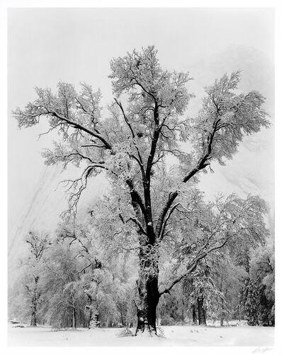 Ansel Adams, 'Oak Tree, Snowstorm, Yosemite National Park, California', 1948