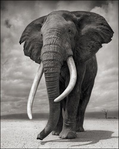 Nick Brandt, 'Portrait of Elephant on Bare Earth', 2011
